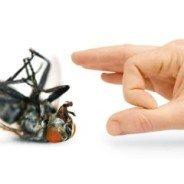 Pest Control Kitchener – A few Tips