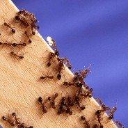 Pest Control Cambridge