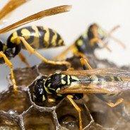 Pest Control Guelph